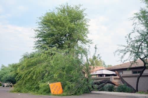 Damaged AZ Trees