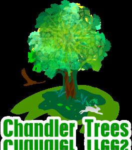 chandler az tree service