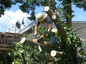 tree reduction services chandler az